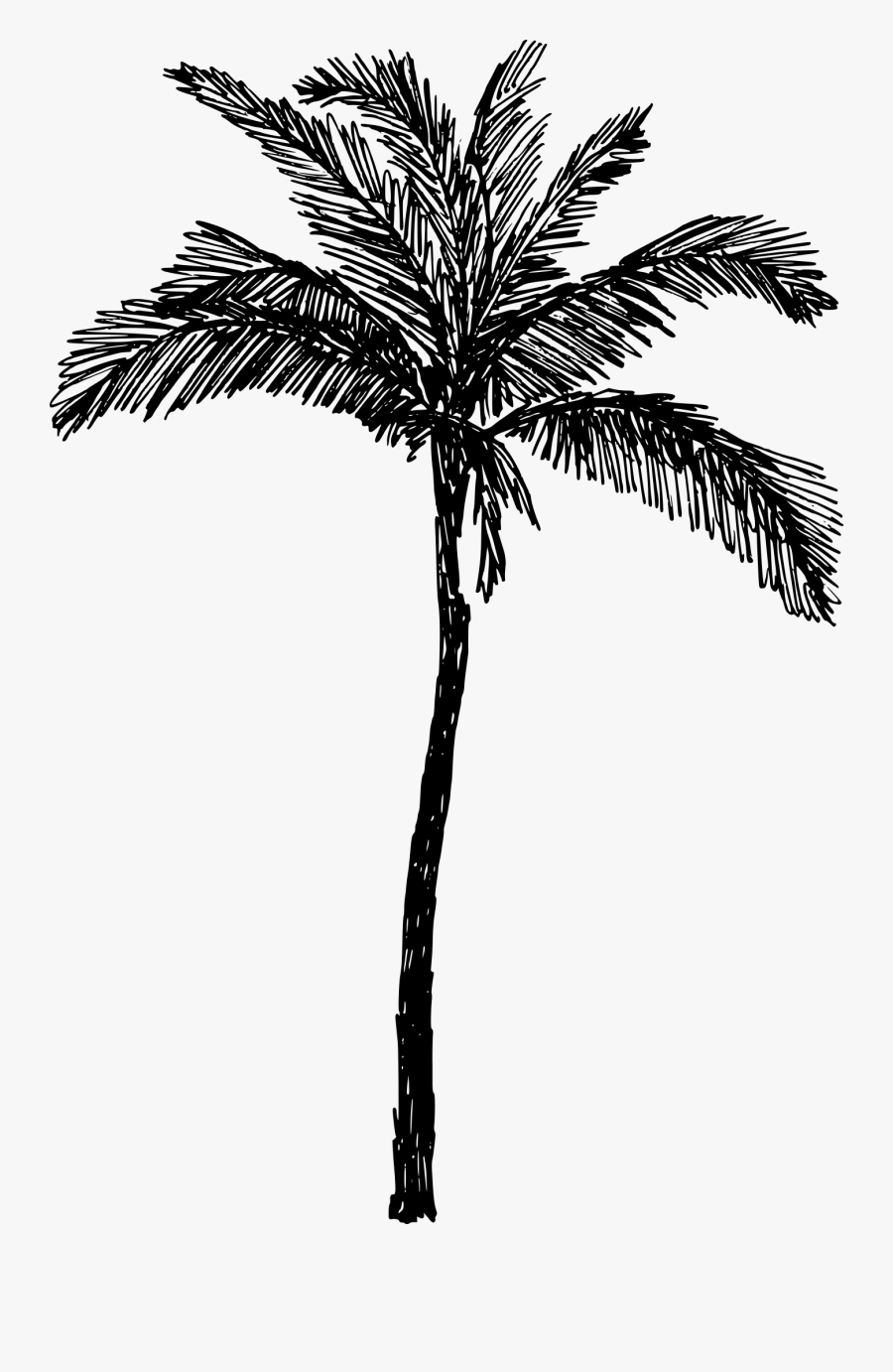Palm-tree - Palm Tree Drawing Png, Transparent Clipart