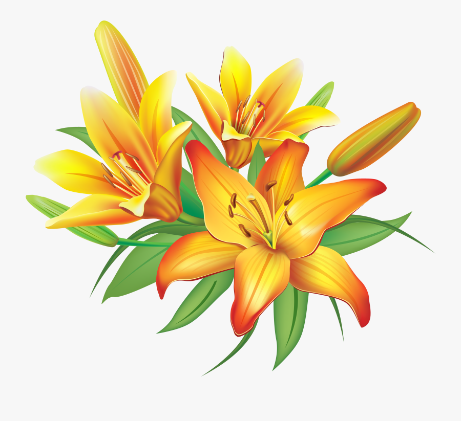 Yellow Lilies Flowers Decoration Png Clipart Image - Lily Flower Clipart Png, Transparent Clipart
