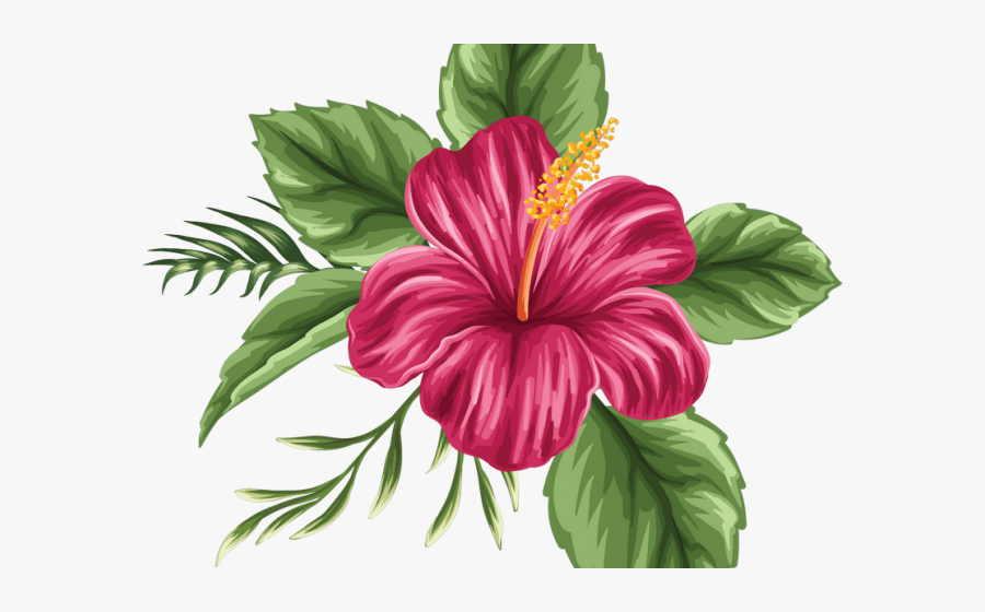 Colored Hibiscus Flower Drawing, Transparent Clipart