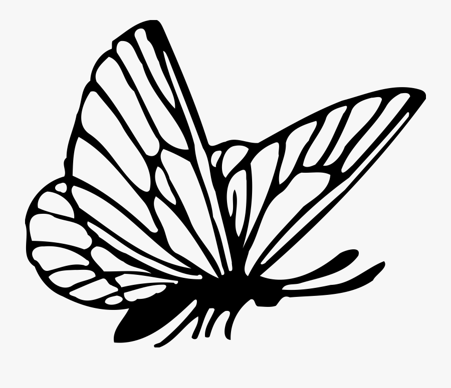 Animal Butterfly Insect Free - Butterfly Drawing Png, Transparent Clipart