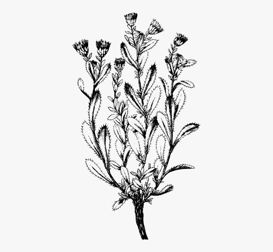 Line Art,plant,flora - Illustration, Transparent Clipart
