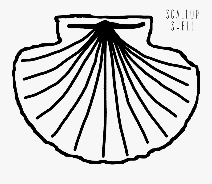 Scallop At Getdrawings Com - Scallop Shell Coloring Page, Transparent Clipart