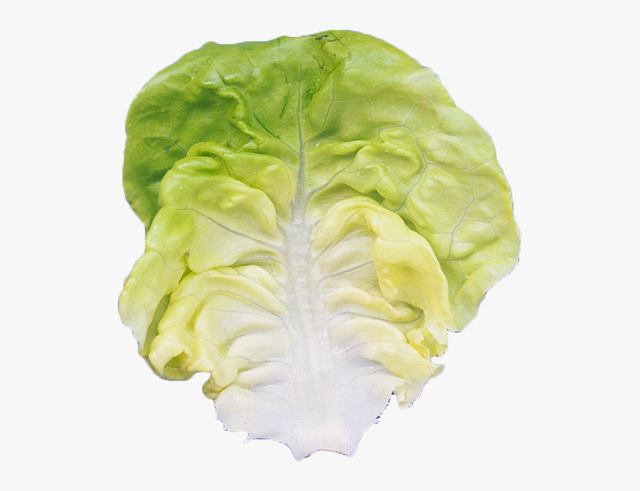 Romaine Lettuce Leaf Vegetable - Iceburg Lettuce, Transparent Clipart