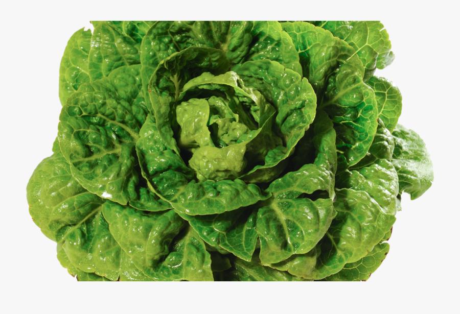 Transparent Lettuce Leaf Png - Romaine Lettuce, Transparent Clipart