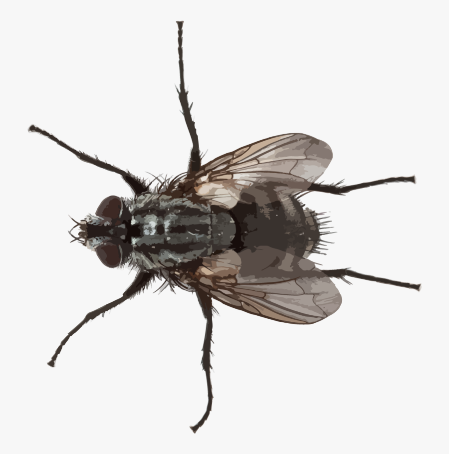 Small Fly Png - Pests Png, Transparent Clipart