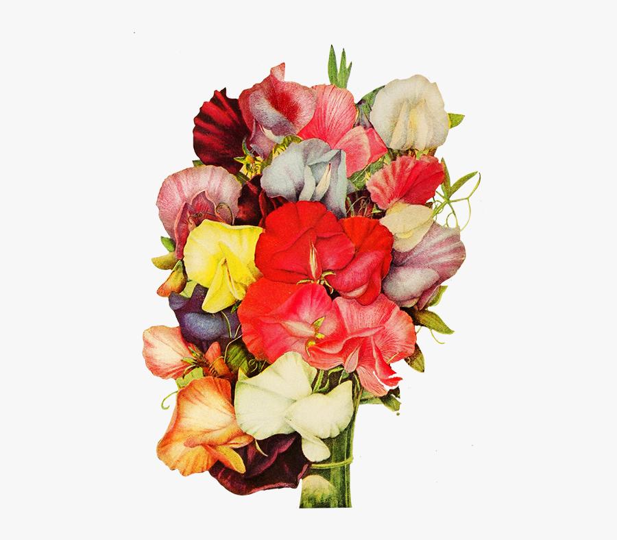 Sweet Pea Flowers - Sweet Pea Flower Clipart Transparent Background, Transparent Clipart