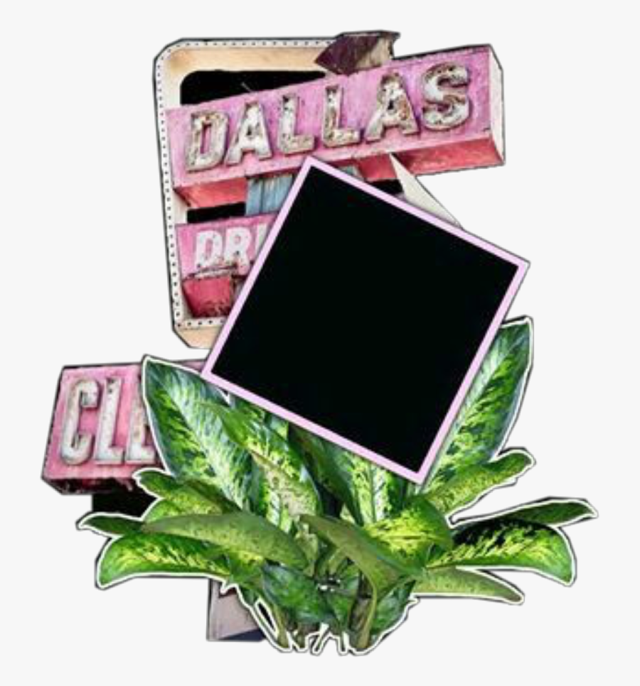 Transparent Dallas Skyline Clipart - Small Plants In Png Format, Transparent Clipart