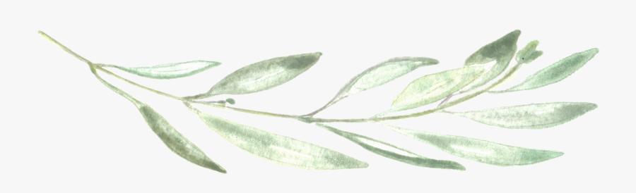 Photographer Chalk Leaf Neva Michelle Photography - Eucalyptus Leaf Png, Transparent Clipart
