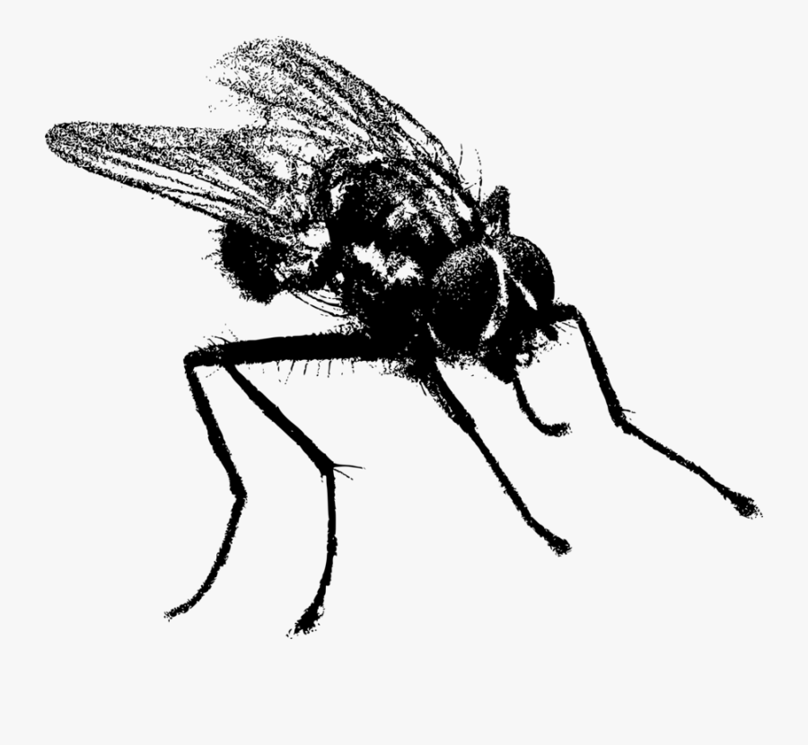 Fly,honey Bee,monochrome Photography - Fly In Black And White, Transparent Clipart
