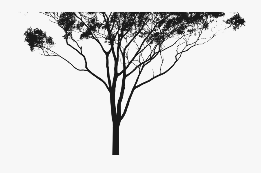 Transparent Woods Silhouette Png - Gum Tree Silhouette Png, Transparent Clipart