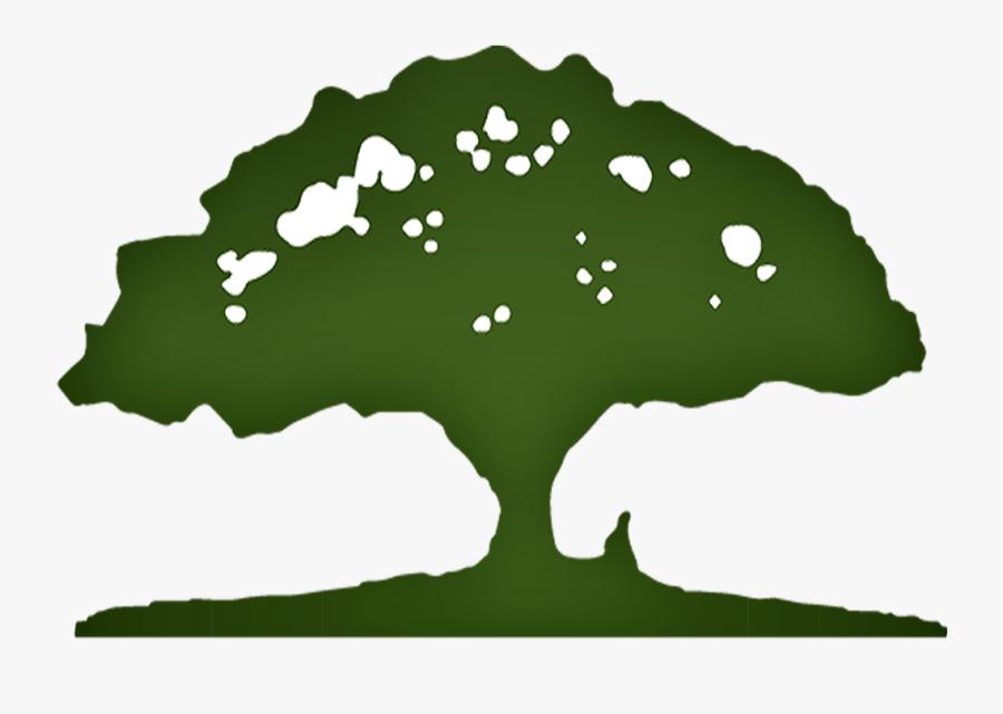 Oak Tree, Transparent Clipart