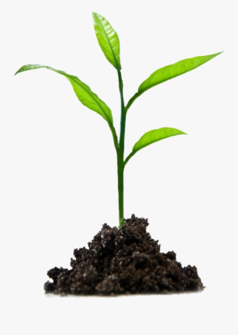 Crops Clipart Sprout - Growing Plant Png, Transparent Clipart