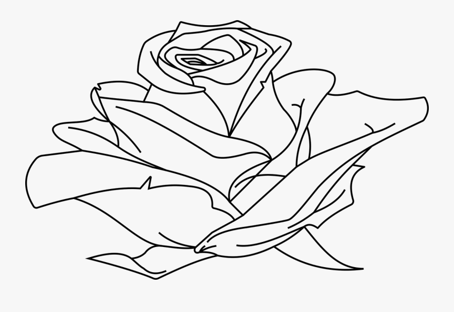 Line Art Drawing Clip Art - Line Art Rose In Line Drawing, Transparent Clipart