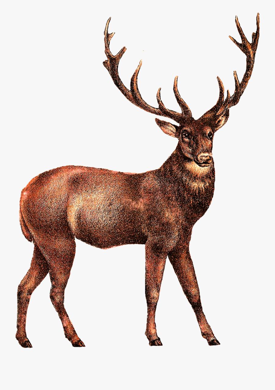 Elk, Transparent Clipart