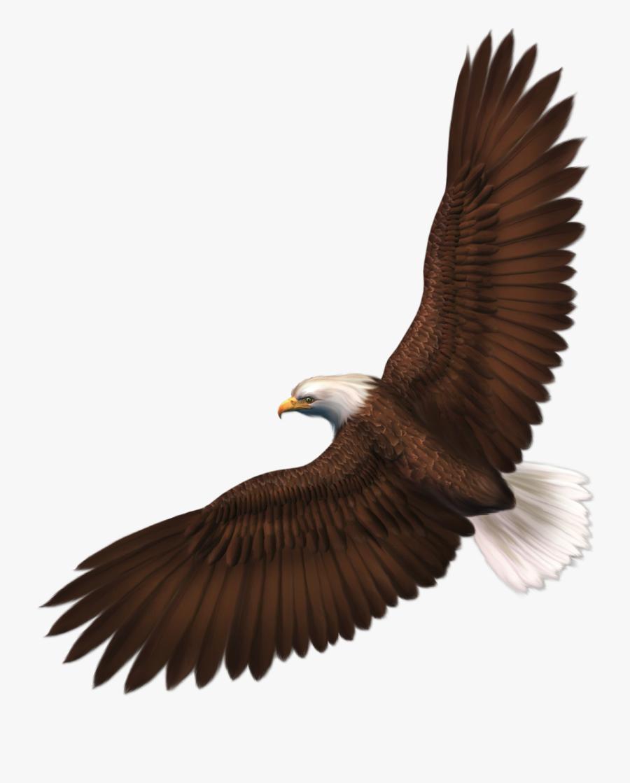 Clip Art Eagle Cliparts Background Download - Transparent Bald Eagle, Transparent Clipart