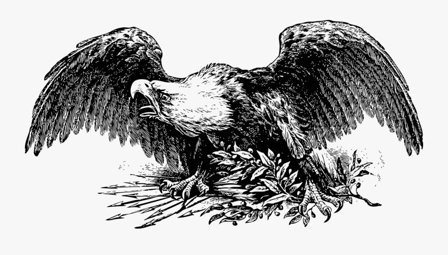 Eagle,wildlife,tree - Civil War Eagle Art, Transparent Clipart