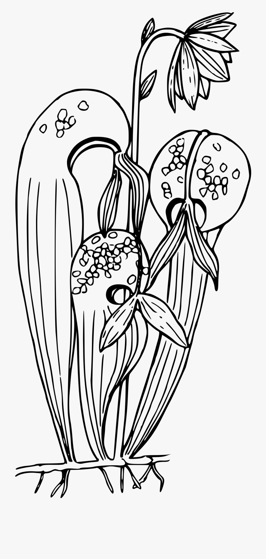 Graphic Library California Clipart Black And White - Pitcher Plant Coloring Page, Transparent Clipart