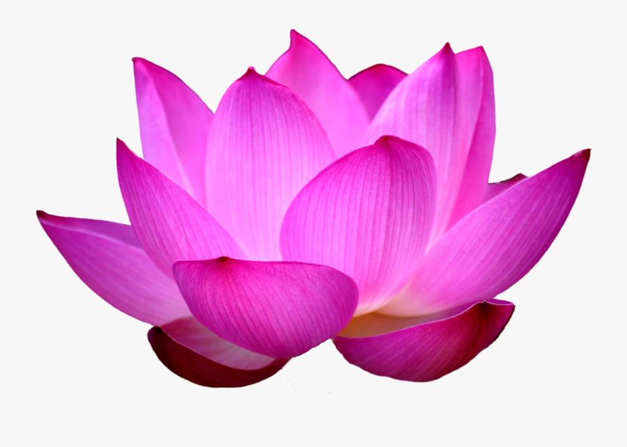 Blue Rose Clipart Blue Lotus - Lotus Png, Transparent Clipart