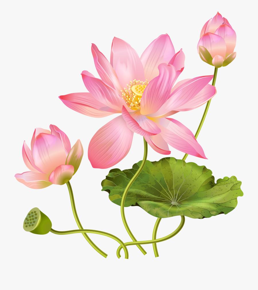 Clip Art Abb A C - Lotus Flower Png Free, Transparent Clipart