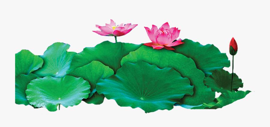 Lotus Png, Transparent Clipart
