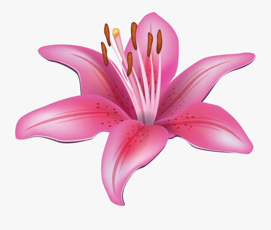 Pink Flower Png Best - Lily Clipart, Transparent Clipart