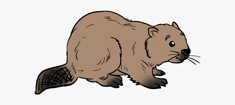 How To Draw Beaver - Step By Step Beaver Easy Drawing, Transparent Clipart
