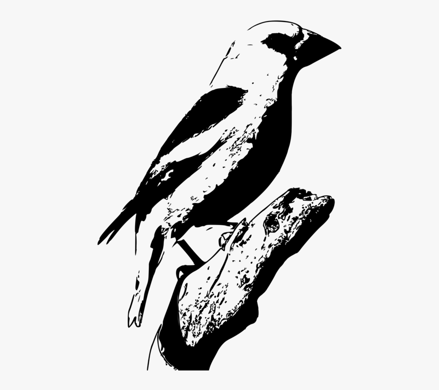 Flightless Bird,art,monochrome Photography - Perching Bird, Transparent Clipart
