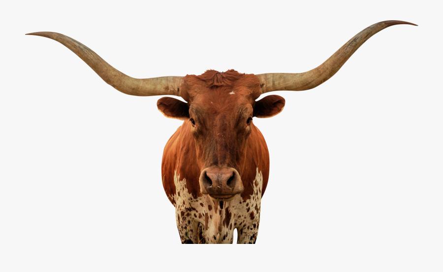 Animalps Battle - Bull, Transparent Clipart