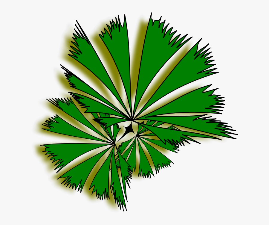 Palm Raphis 01a - Top View Tree Png, Transparent Clipart