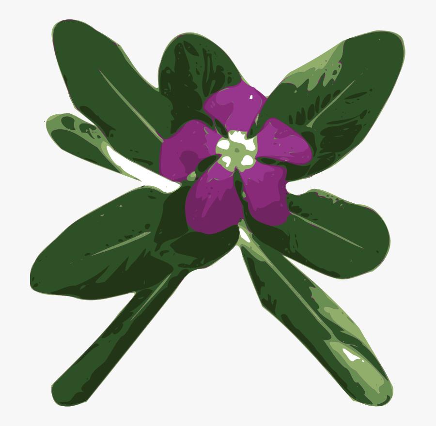 Vinca - Catharanthus Roseus Png, Transparent Clipart