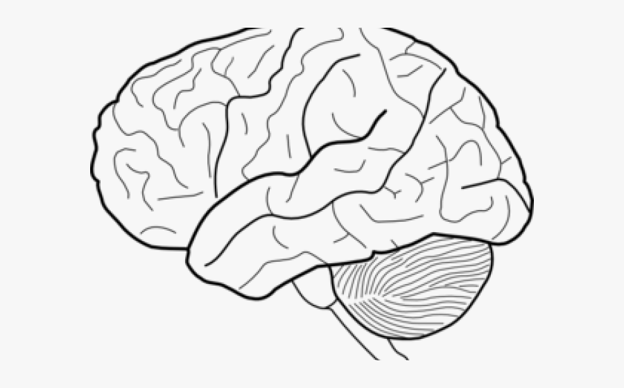 28 Unlabeled Brain Diagram - Wiring Database 2020