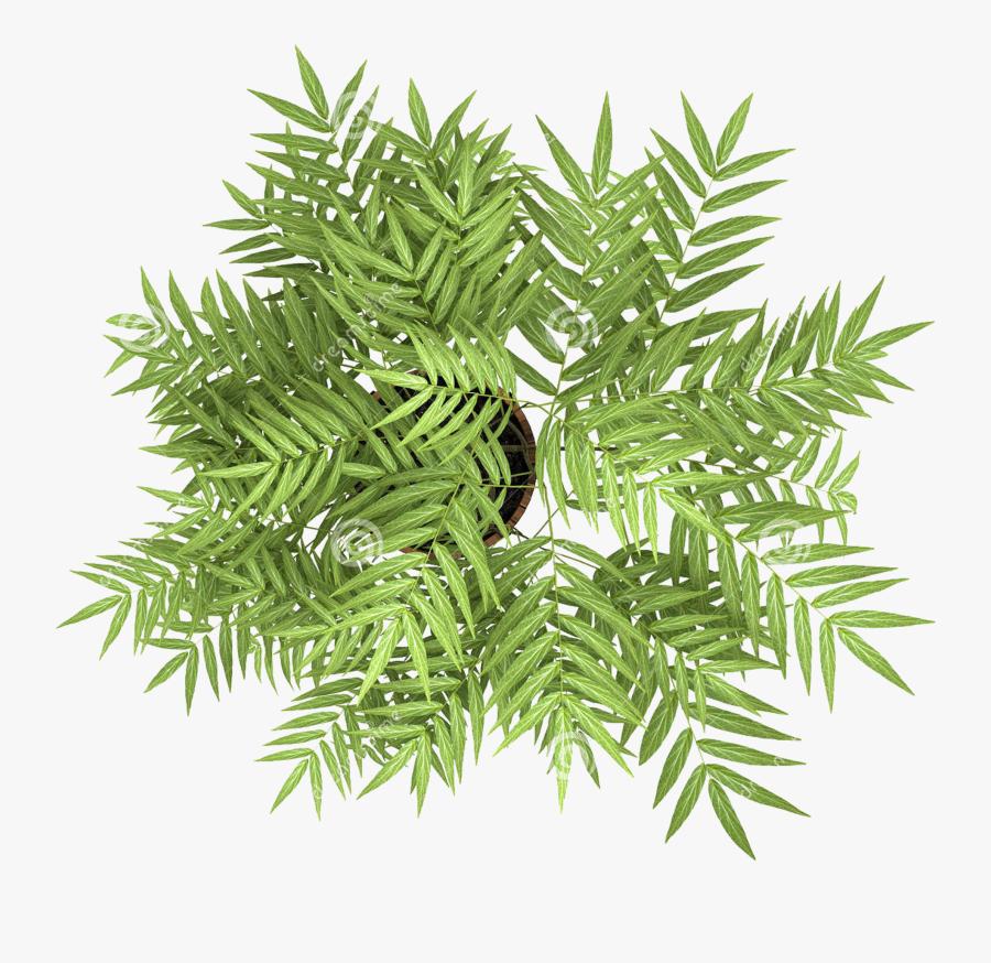 Transparent Flowering Tree Png - Plants Top View Png, Transparent Clipart