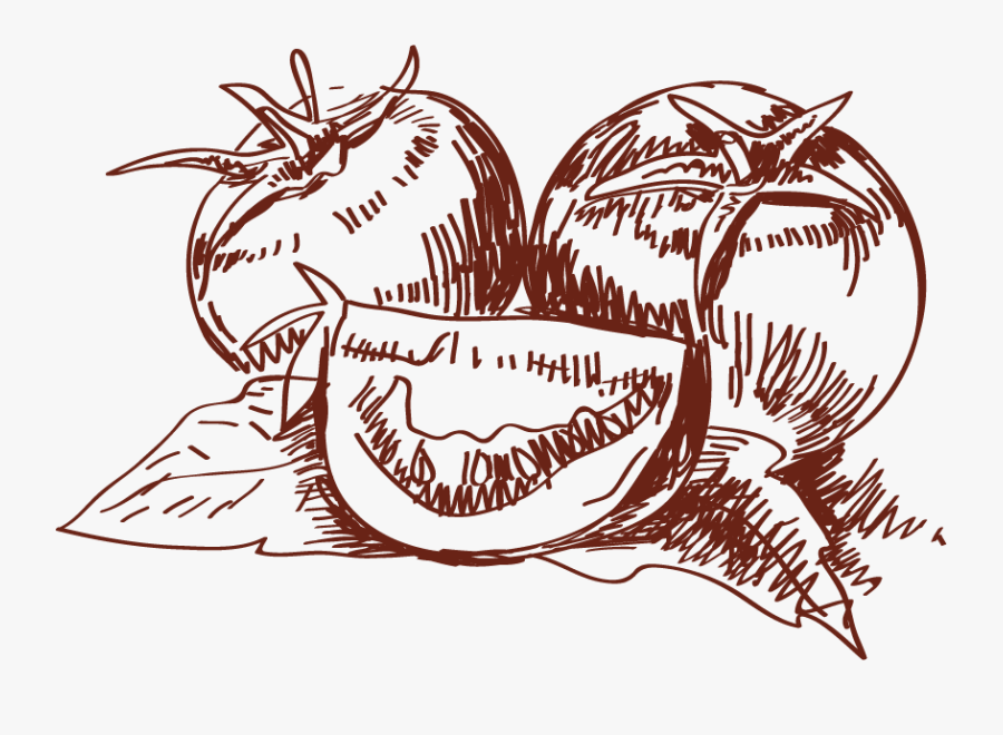 Transparent Tomate Clipart - Hand Drawn Tomato Png, Transparent Clipart