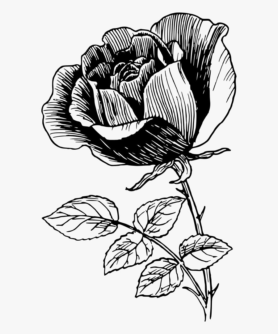Rose - Line Art Rose Flower Design, Transparent Clipart