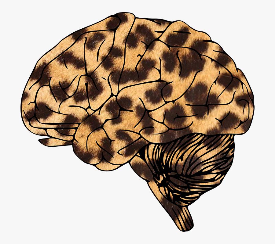 Brain, Leopard, Animal-print, Spotty, Spots - Leopard Print Tote Bag Uk, Transparent Clipart