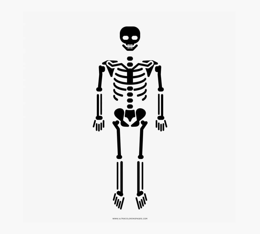 Skeleton Body Icon Png, Transparent Clipart