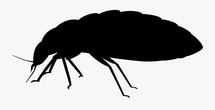 Bed Bug Removal Jiminey Kricket Exterminating - Silhouette Punaise De Lit, Transparent Clipart