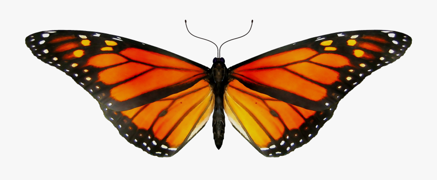 Monarch Butterfly Gif Clip Art Insect - Butterfly Animated Gif Png, Transparent Clipart