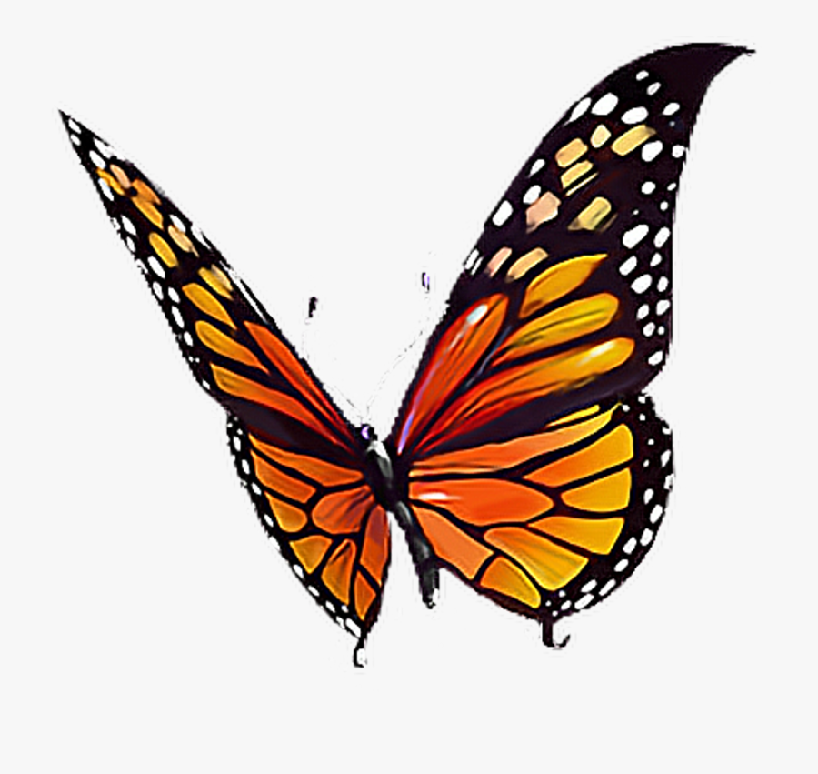 #butterfly #orange #black #yellow #white #butterflylove - Black Yellow And Orange Butterfly, Transparent Clipart
