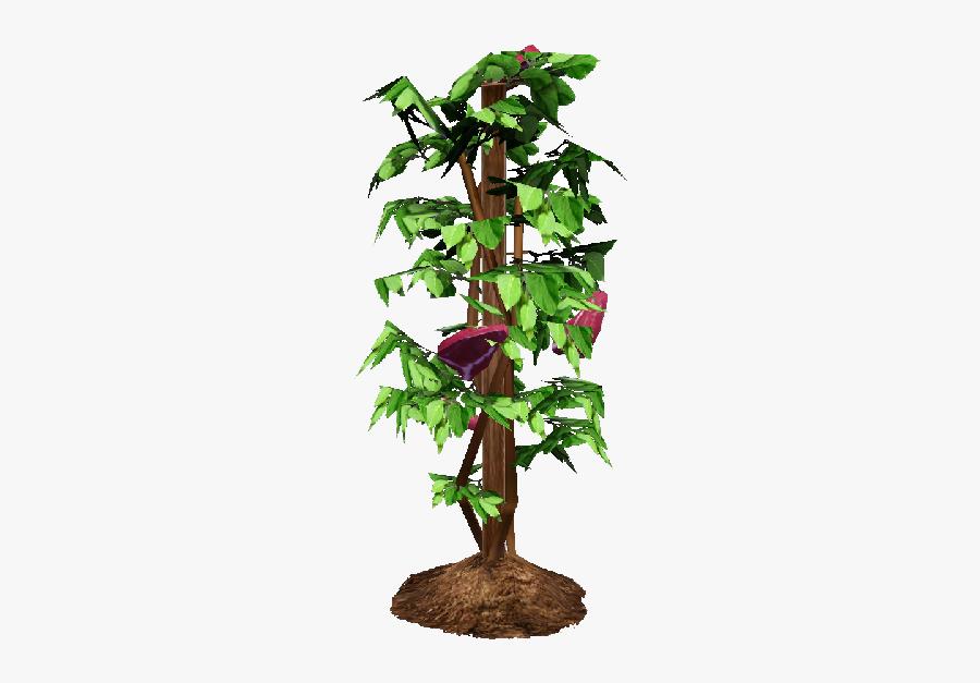 Tomato Plant Png - Houseplant, Transparent Clipart