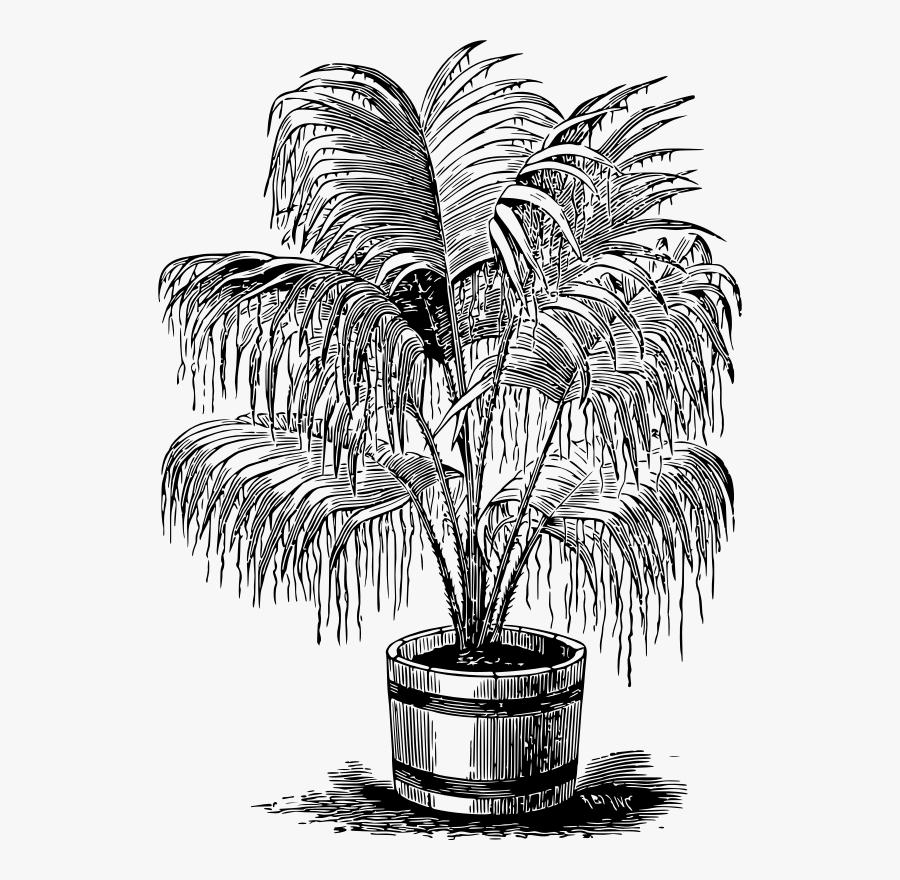 Palm - Palm Plant Clipart Free, Transparent Clipart