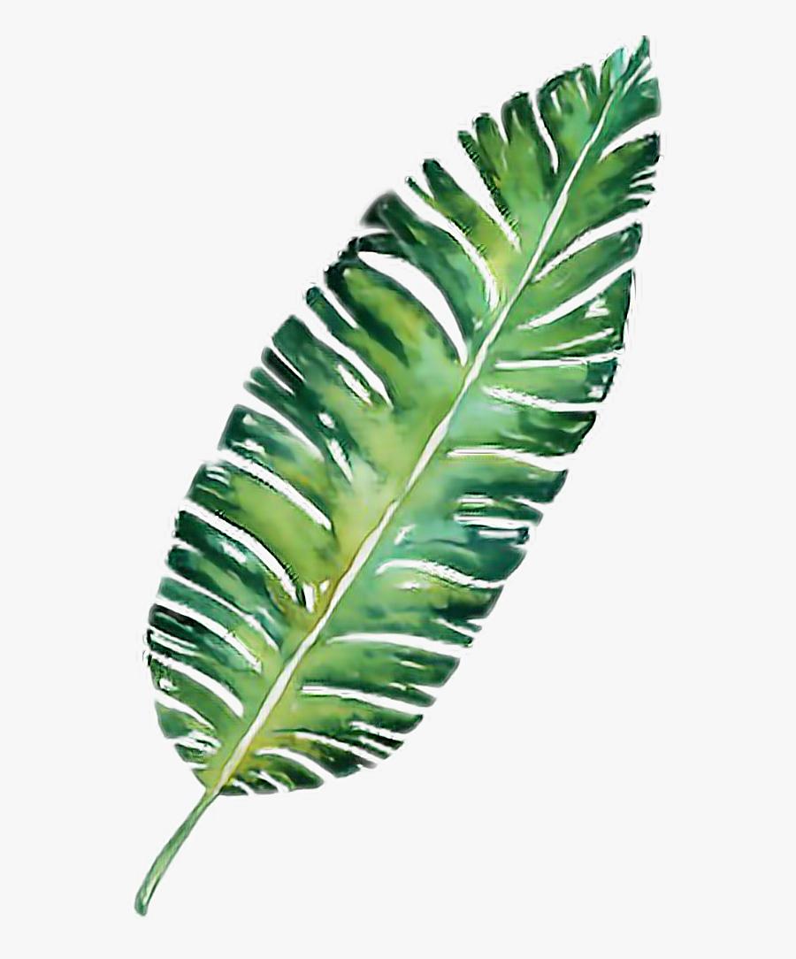 #palm #leaf #plant #palmtrees #palmtree #freetoedit, Transparent Clipart