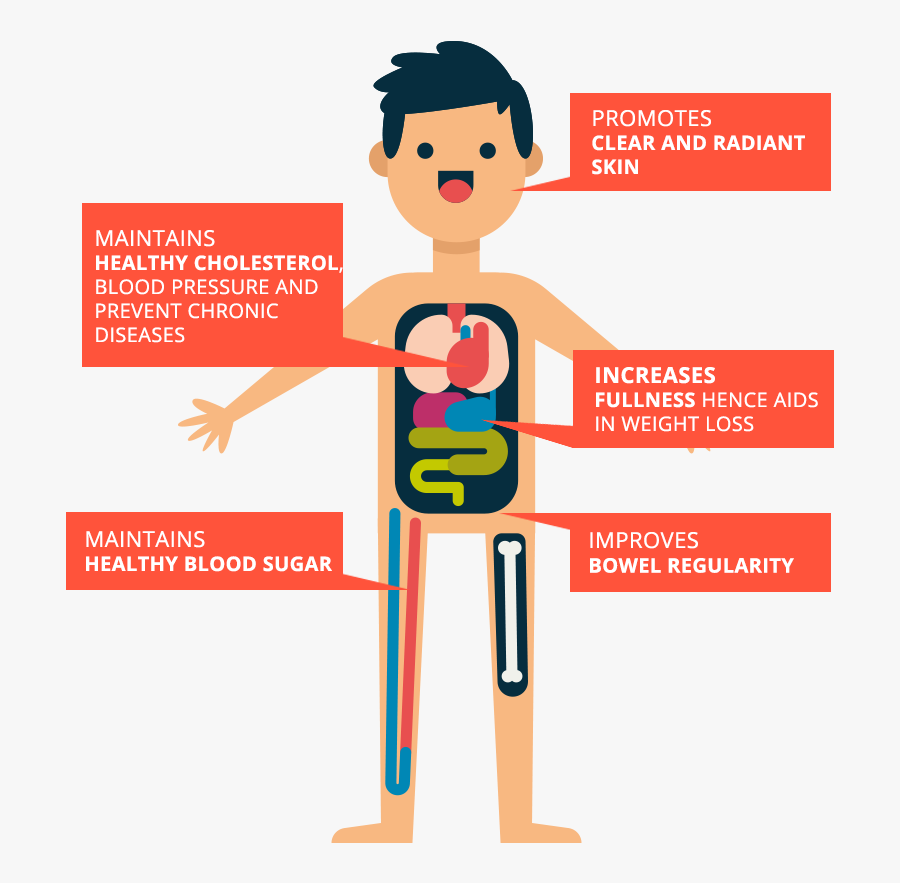 How Fiber Helps Your Body Cartoon Free Transparent Clipart Clipartkey