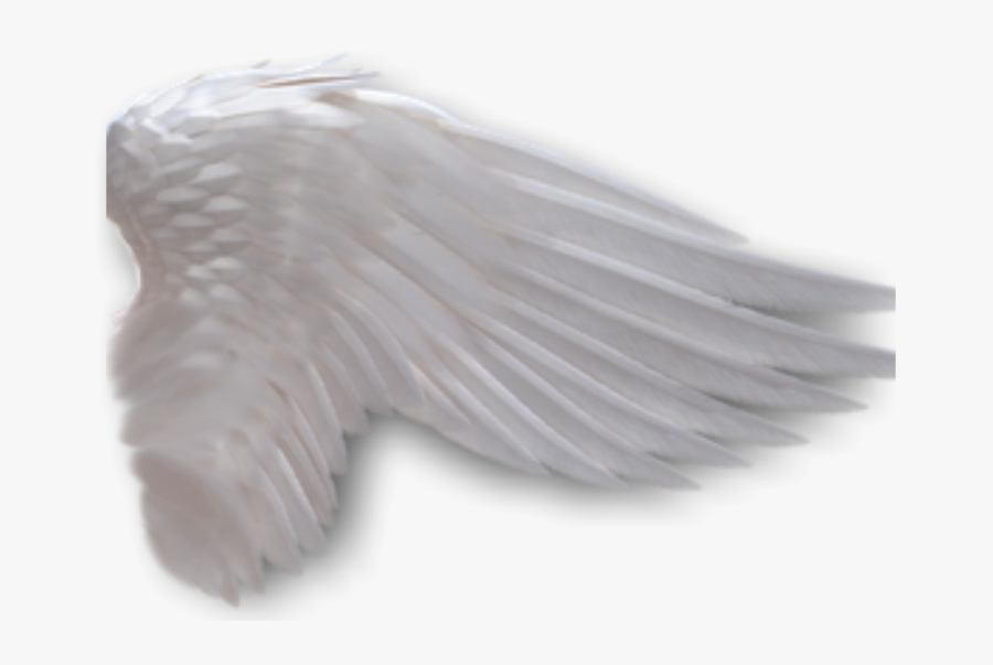 Angel Wings No Background - Side View Angel Wings Png, Transparent Clipart