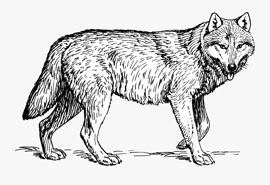 Puppy Arctic Wolf Coloring Book Pack Clip Art - Wolf Line Drawing, Transparent Clipart