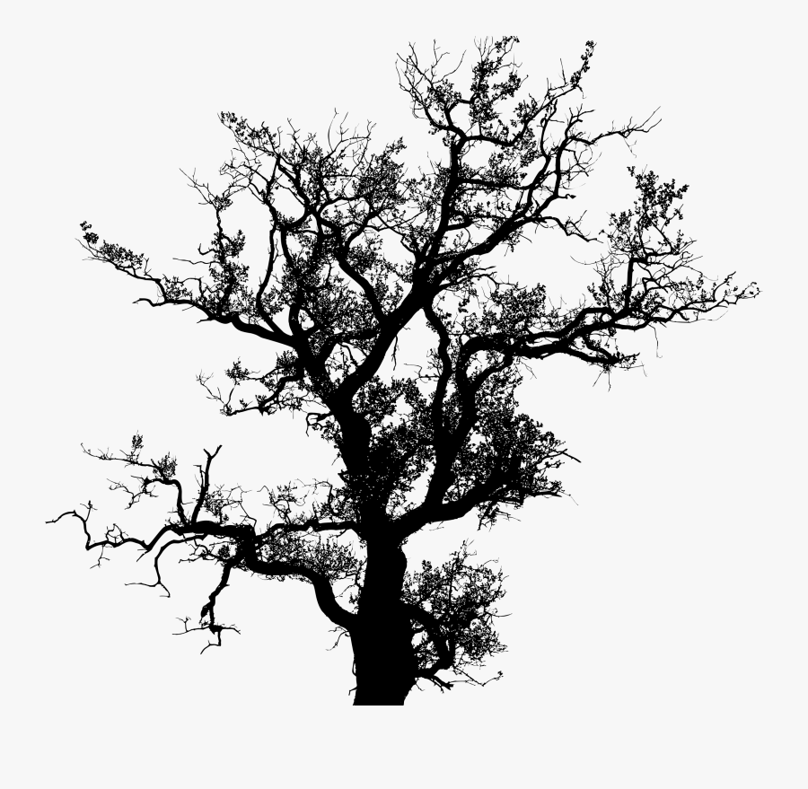 Transparent Oak Tree Clipart - Tree Silhouette Vector Png, Transparent Clipart