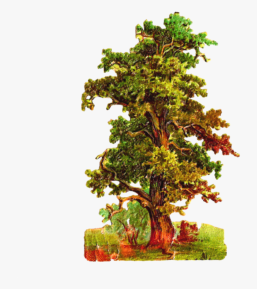 Oak Tree Antique Images Free Tree Graphic Vintage Oak - Vintage Tree Png, Transparent Clipart