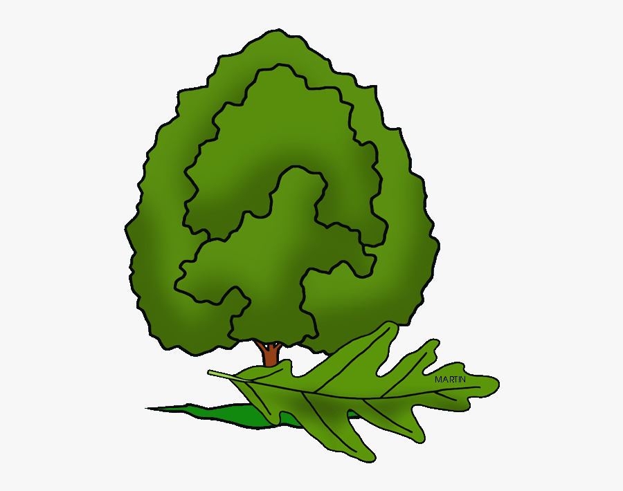 Illinois State Tree - Illinois State Tree Drawing, Transparent Clipart