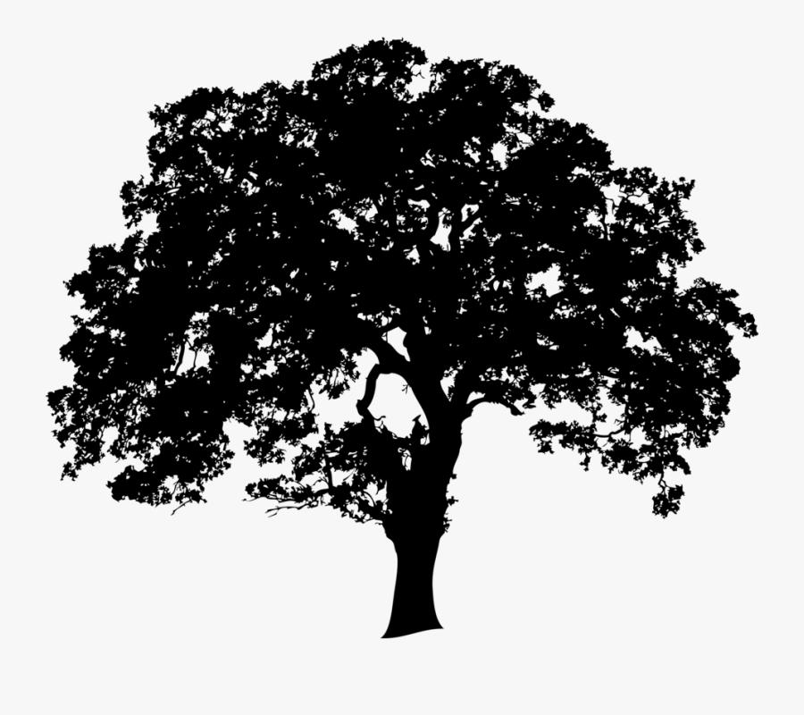 Transparent Oak Tree Silhouette Png - Silhouette Oak Tree Png, Transparent Clipart