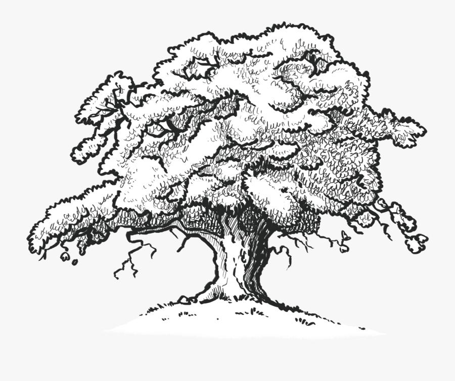 The Old Oak Tree Edenbray - Oak Tree Line Drawing, Transparent Clipart